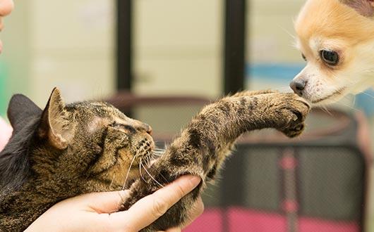 猫にとって動物病院とは