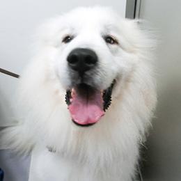 献血協力犬02