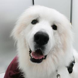 献血協力犬03