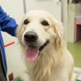 献血協力犬09