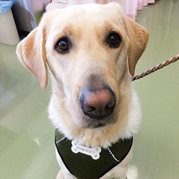 献血協力犬15