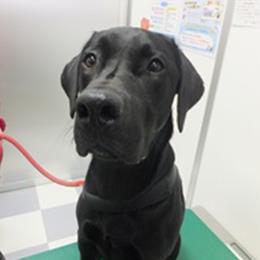 献血協力犬16