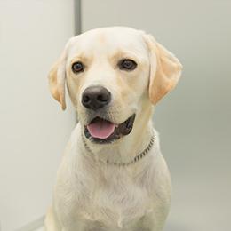 献血協力犬20